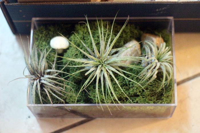 kiwi-crate-1