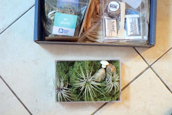 kiwi-crate-6