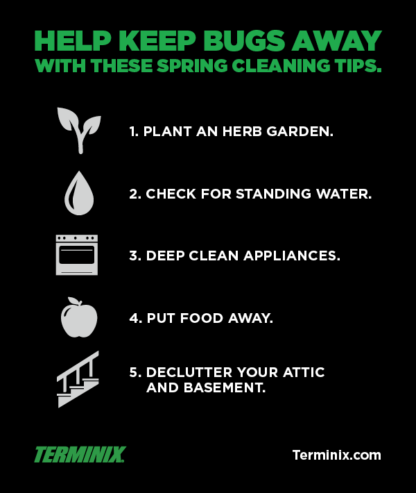 Help Keep Bugs Away With These Spring Cleaning Tips