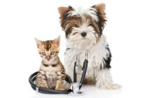 8 things that will make your pet sick8 things that will make your pet sick