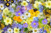 The Surprising Physiological Benefits of Flowers