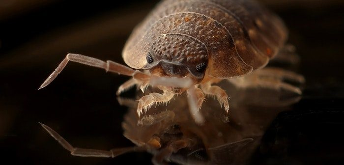 Best Eco-Friendly Pest Control Tips For Your Home