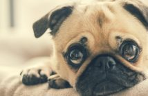 Creating Adorable Memories with Your Pet Is Now Easy