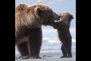 bears532c736492d68