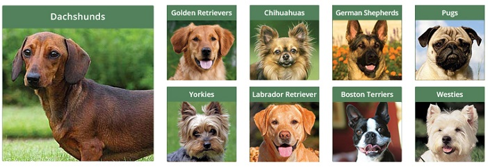 calendars-dog breeds jpg