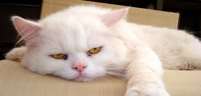 Move over, Dear Abby... 9Lives' Morris the Cat is here