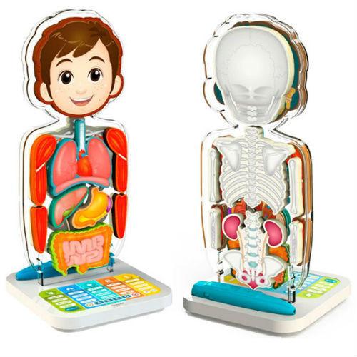 smart-anatomy