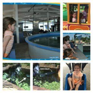 Manatee, Sea Turtles Rehabilitation Rescue