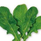 better-salad-arugula