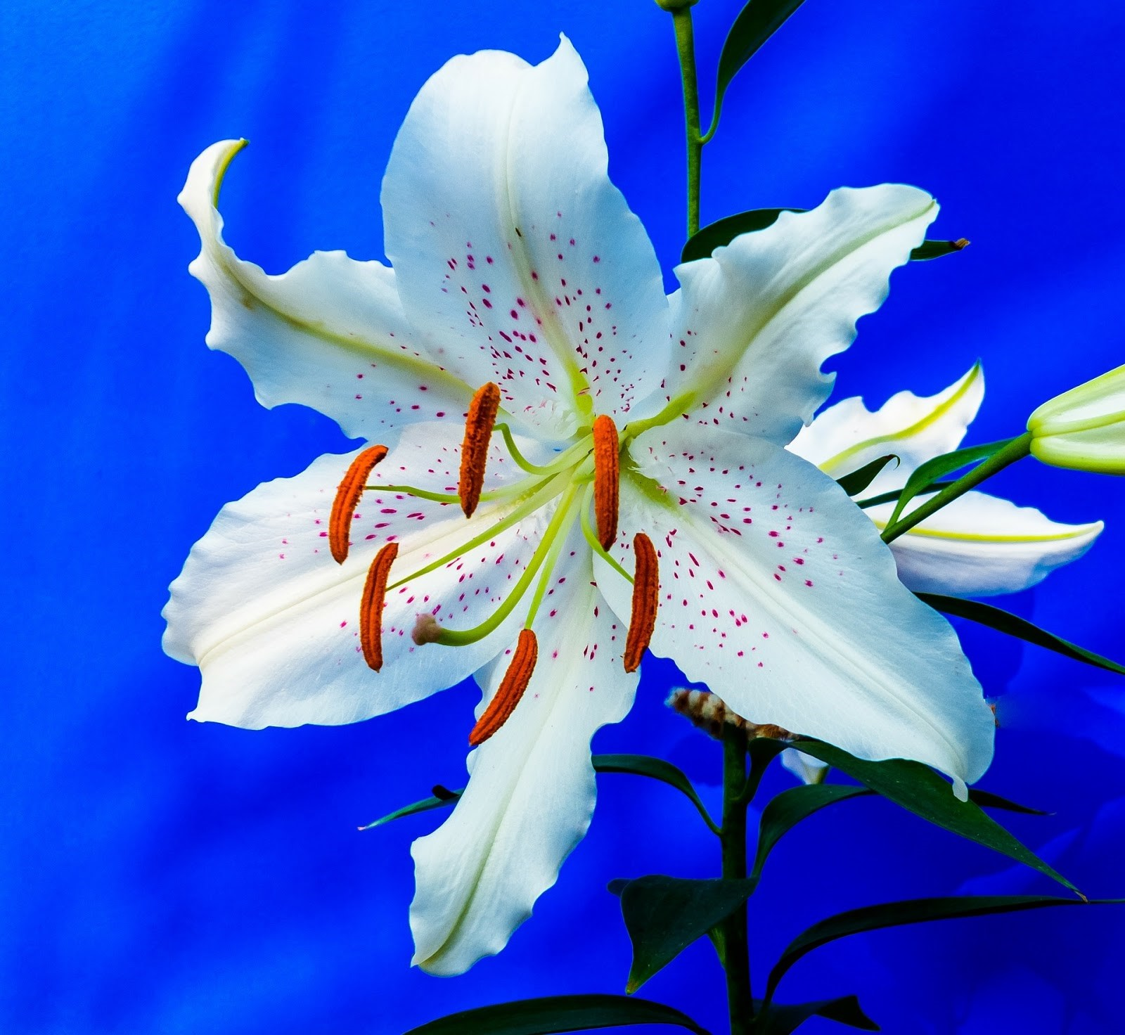The 5 best summer flowers to plant mom blog society there are many different varieties of lilies they are perennial flowers that can be transplanted very easily once grown these flowers are resilient and izmirmasajfo