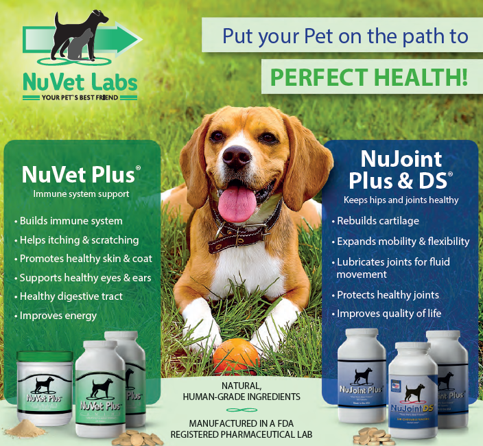 Take Care of Your Dog's Immune System and Joint Health with NuVet Labs