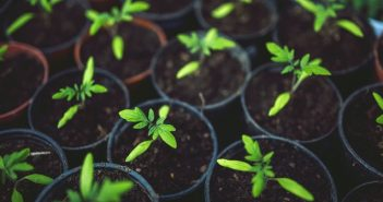 Cultivating a Fantastic Organic Garden on a Budget