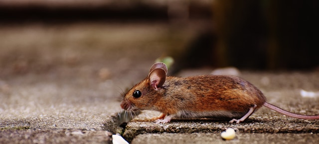 Tips How to Keep Rodents Out of the Garden