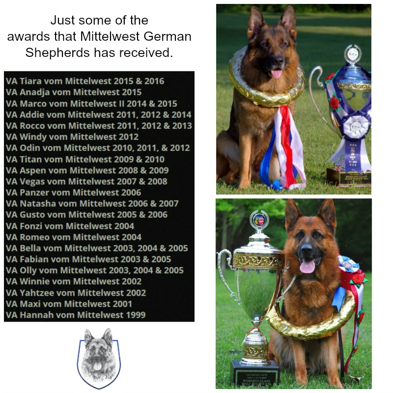 Mittelwest Champion German Shepherds: Buy and Board With the BEST
