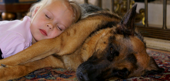 Top 5 Reasons German Shepherds are the Best Family Dogs