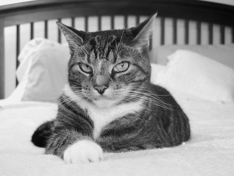 XO Comfort Cat